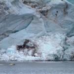 Isbjørn svømmer foran gletcher