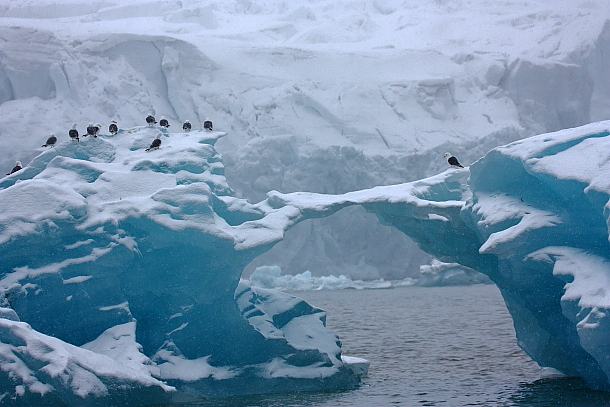 arktis natur